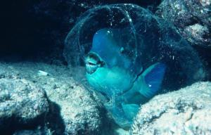 parrot Fish can make themselves a kind of mucus sleeping bag