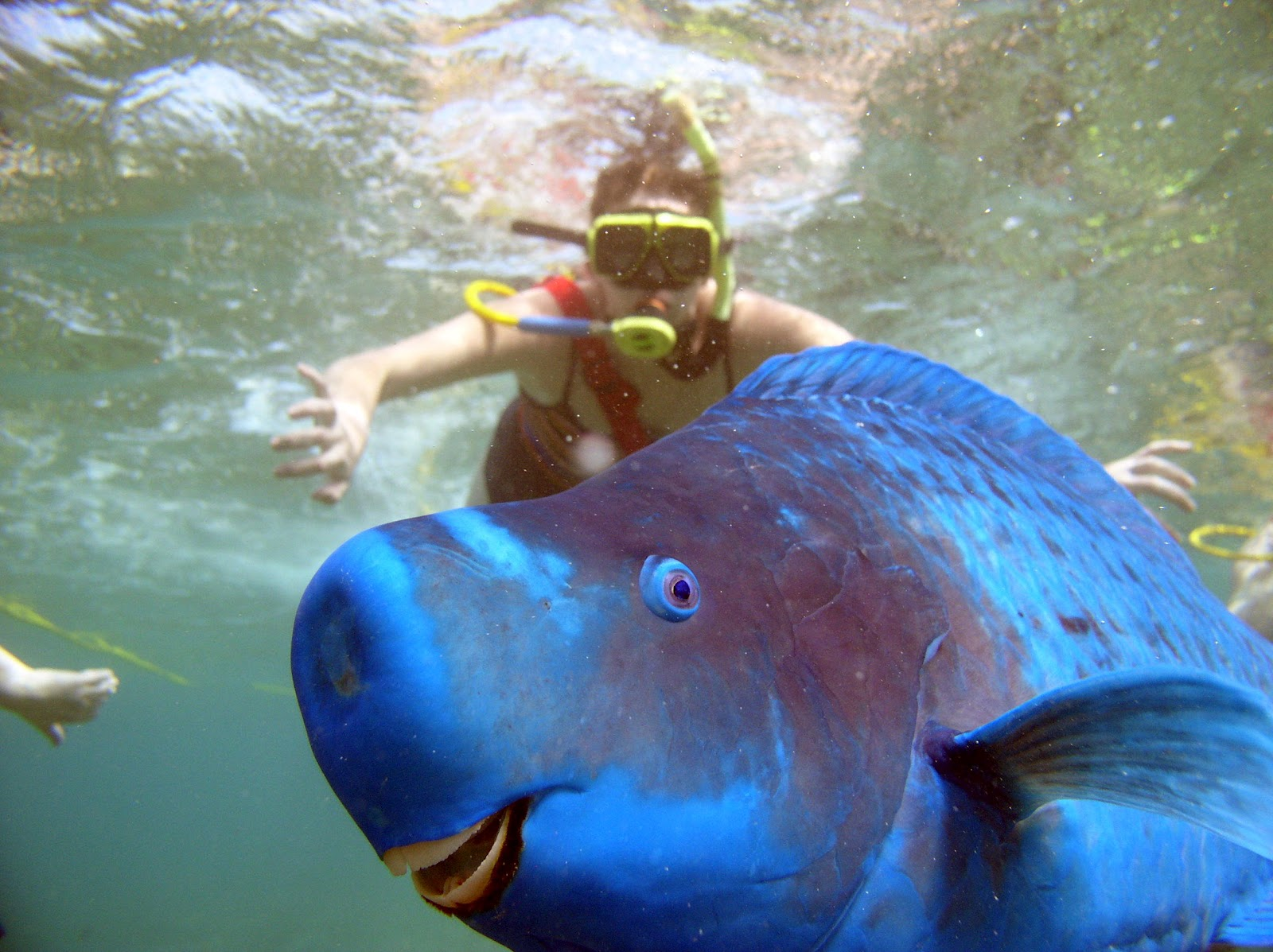 why the blue parrotfish is just like you climbing ladders