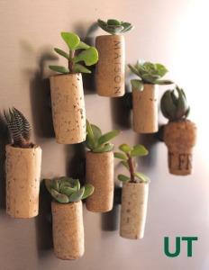 cork_planters_UT